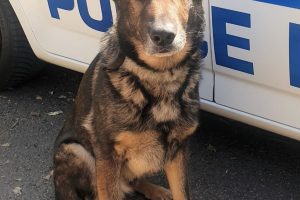 Two men have been arrested on suspicion of driving offences after a police dog tracked them to an address in Crawley