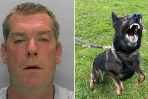 A prolific burglar has been jailed after he was found hiding in a summerhouse by a police dog named Goose