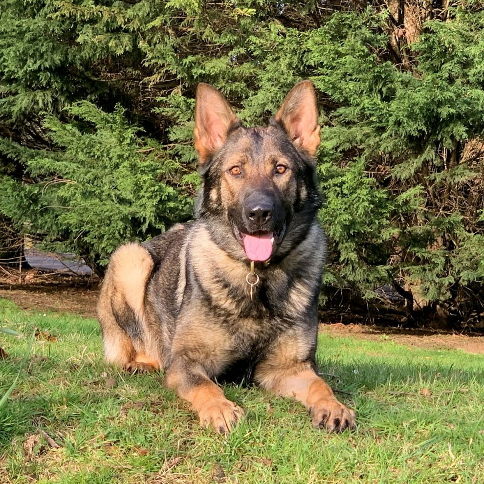 The Sky is the limit for one Sussex Police dog